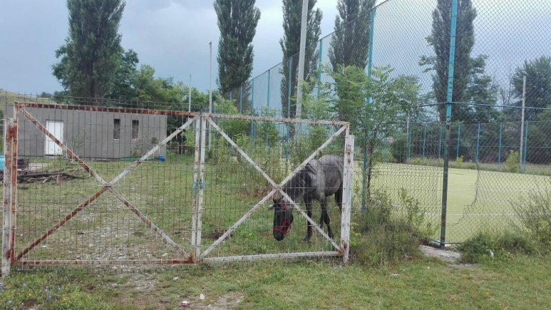 BAZĂ SPORTIVĂ DE MILIARDE, GRAJD PENTRU ANIMALE