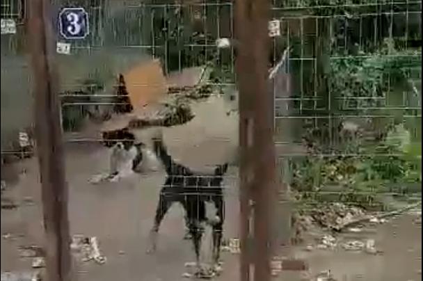 """ÎN ATENȚIA PRIMARULUI TÂRGOVIȘTEI! """"ADĂPOST"""" DE MAIDANEZI, ÎN CENTRUL TÂRGOVIȘTEI – VIDEO!"""