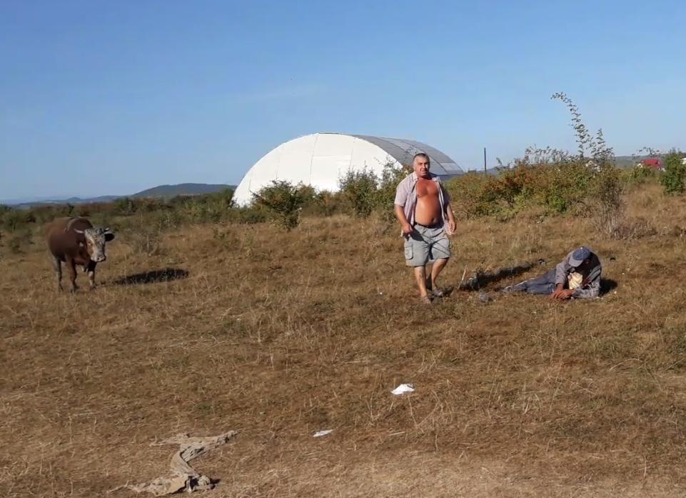EXCLUSIV! SCENE CUMPLITE LÂNGĂ TÂRGOVIȘTE! UN BĂRBAT A FOST ATACAT PE CÂMP DE UN TAUR – VIDEO!