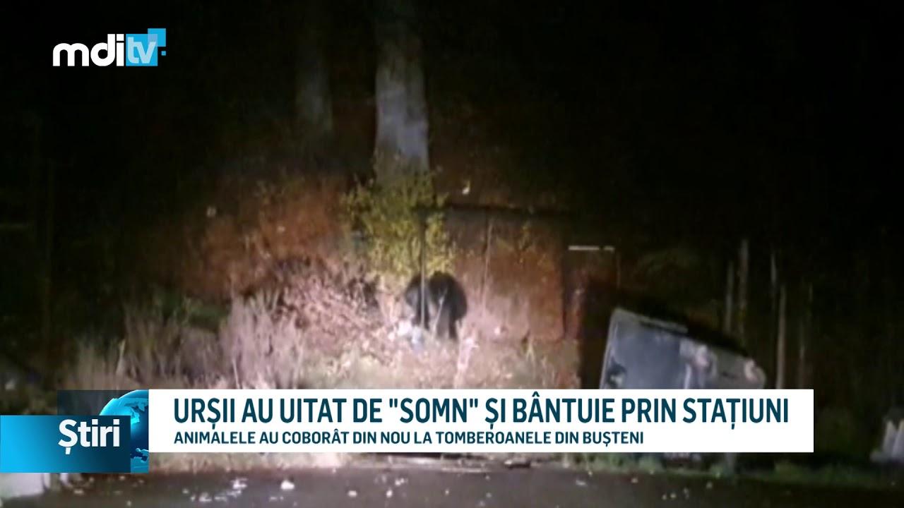 """URȘII AU UITAT DE """"SOMN"""" ȘI BÂNTUIE PRIN STAȚIUNI"""