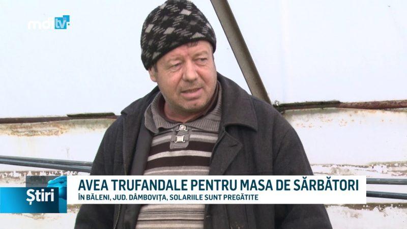 VOM AVEA TRUFANDALE PENTRU MASA DE SĂRBĂTORI