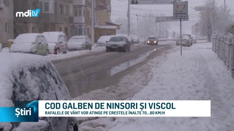 COD GALBEN DE NINSORI ȘI VISCOL