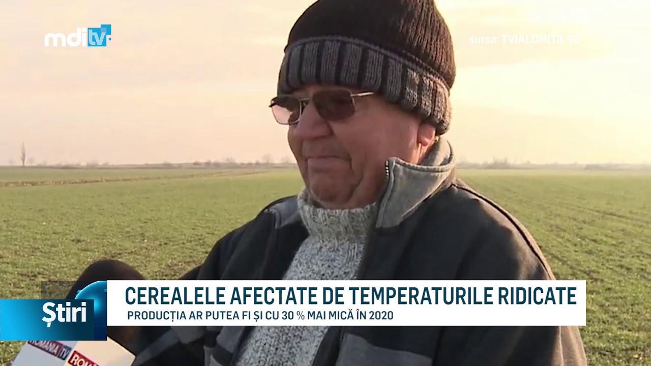 CEREALELE AFECTATE DE TEMPERATURILE RIDICATE