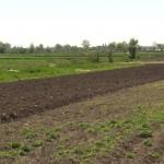 CULTURILE AGRICOLE, LA MANA CERULUI