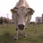 VACILE PASC… LA BLOC! – VIDEO