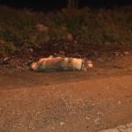 ACCIDENT GRAV DIN CAUZA UNUI CÂINE – VIDEO