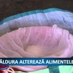 CĂLDURA ALTEREAZA ALIMENTELE – VIDEO