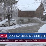 COD GALBEN DE GER ŞI NINSORI – VIDEO