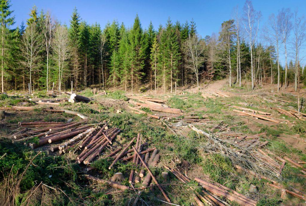 """RETROCEDĂRILE FORESTIERE """"CHELESC"""" PĂDUREA"""