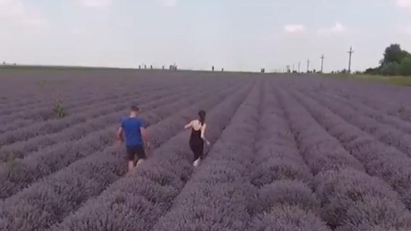 DE LA ARHITECTURĂ LA AGRICULTURĂ