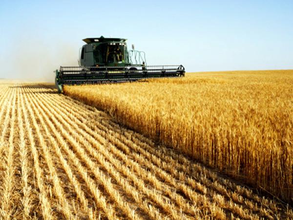 VREMEA CAPRICIOASĂ A AFECTAT PRODUCŢIILE AGRICOLE