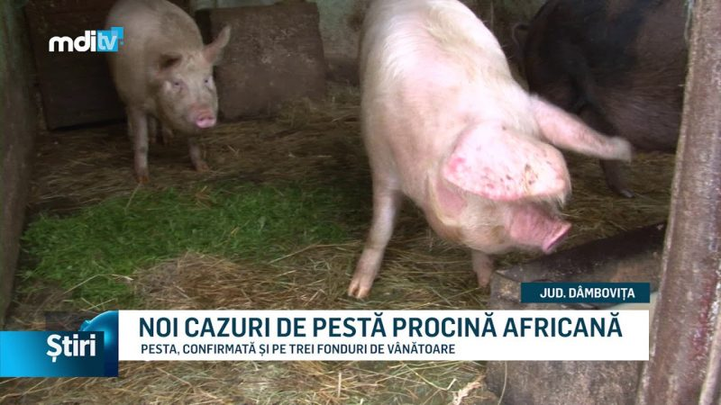NOI CAZURI DE PESTĂ PROCINĂ AFRICANĂ