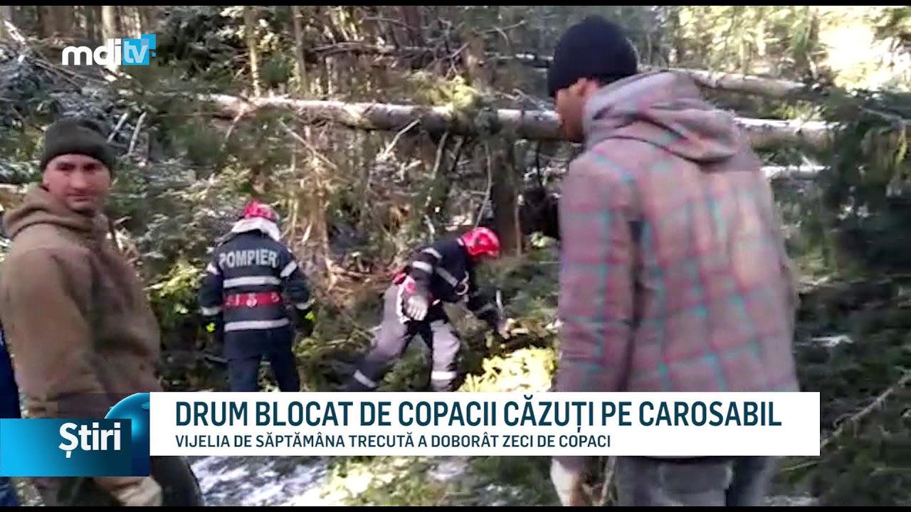 DRUM BLOCAT DE COPACII CĂZUȚI PE CAROSABIL