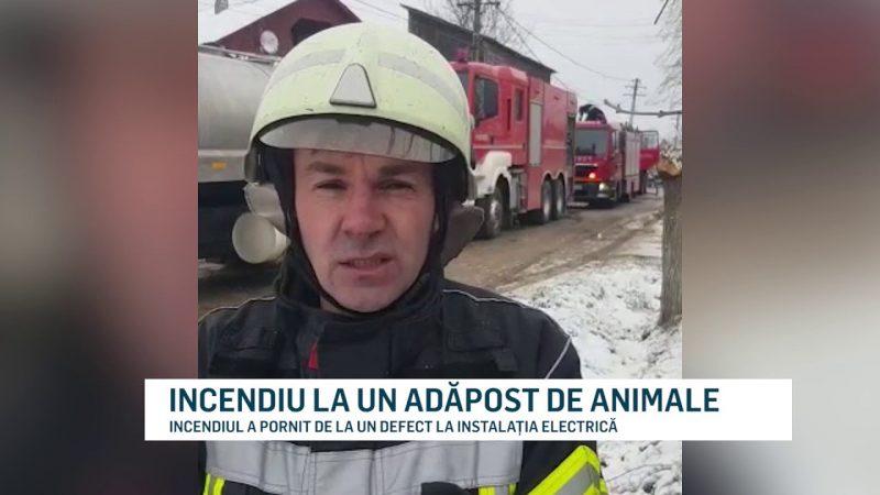INCENDIU LA UN ADĂPOST DE ANIMALE
