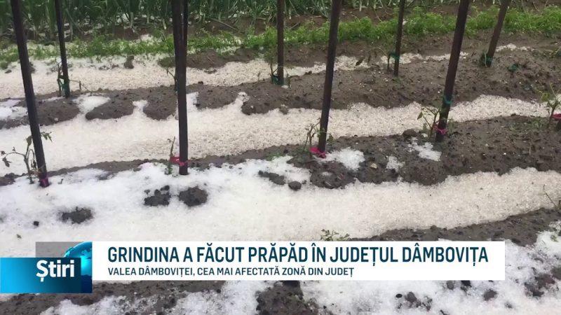 GRINDINA A FĂCUT PRĂPĂD ÎN JUDEȚUL DÂMBOVIȚA