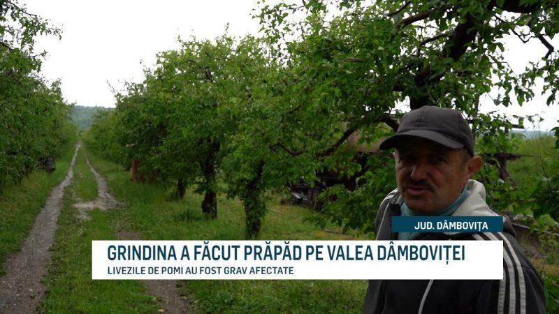 GRINDINA A FĂCUT PRĂPĂD PE VALEA DÂMBOVIȚEI