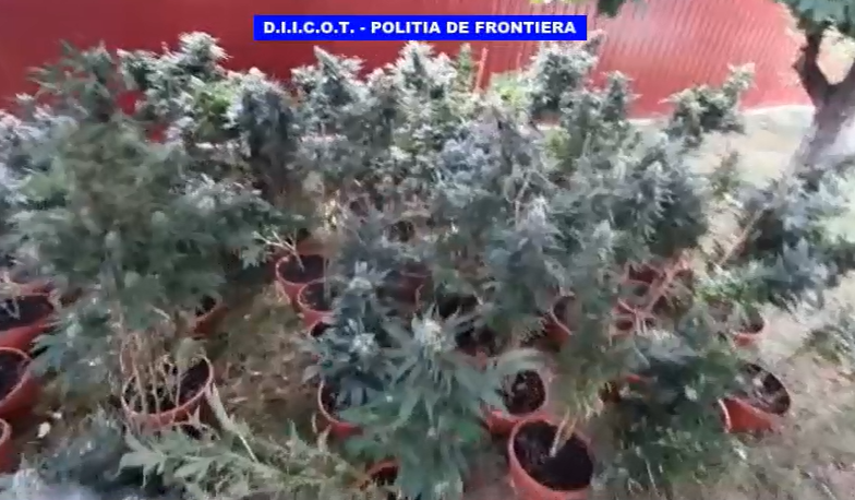 PERCHEZIȚII LA TRAFICANȚII DE DROGURI DIN GIURGIU ! VIDEO!