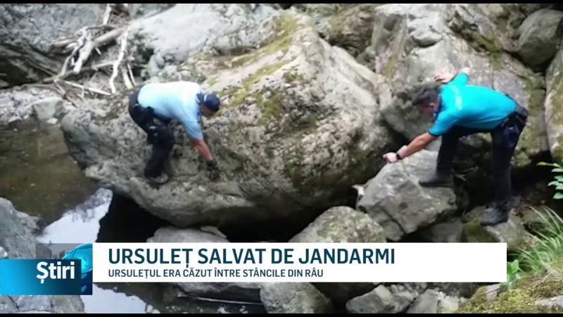 URSULEȚ SALVAT DE JANDARMI