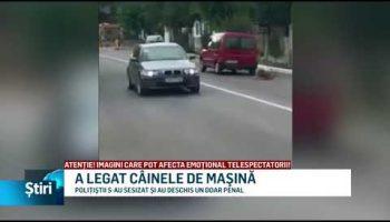 A LEGAT CÂINELE DE MAŞINĂ