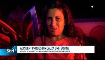 ACCIDENT PRODUS DIN CAUZA UNEI BOVINE